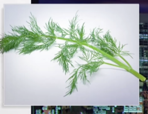 2015-03-02_07-23-50-dill